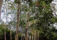 13 Jenis Pohon Untuk Penghijauan!