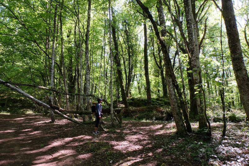 Forêt près du Lac d'Annecy