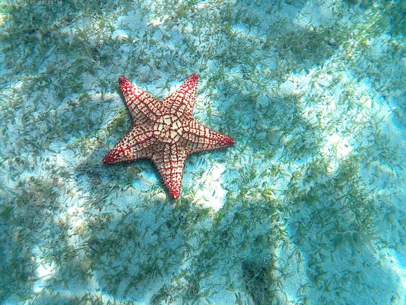 Etoile de mer en Martinique
