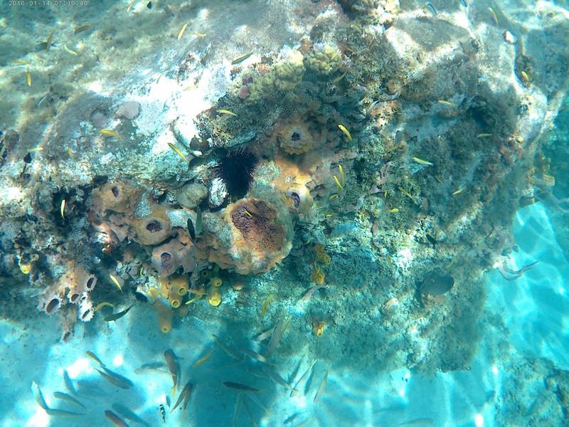 Faune sous-marine en Martinique