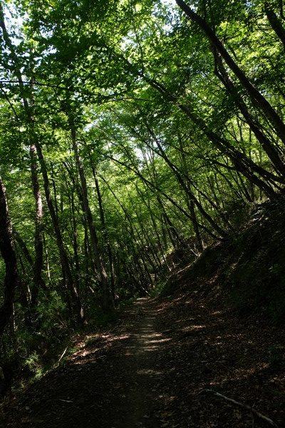 Randonnée dans la forêt à Sospel