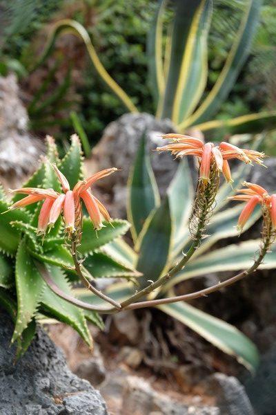 Végétation durant le tour du Cap Martin