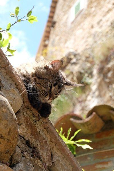 Un chat sur un toit à Roquebrune-Cap-Martin