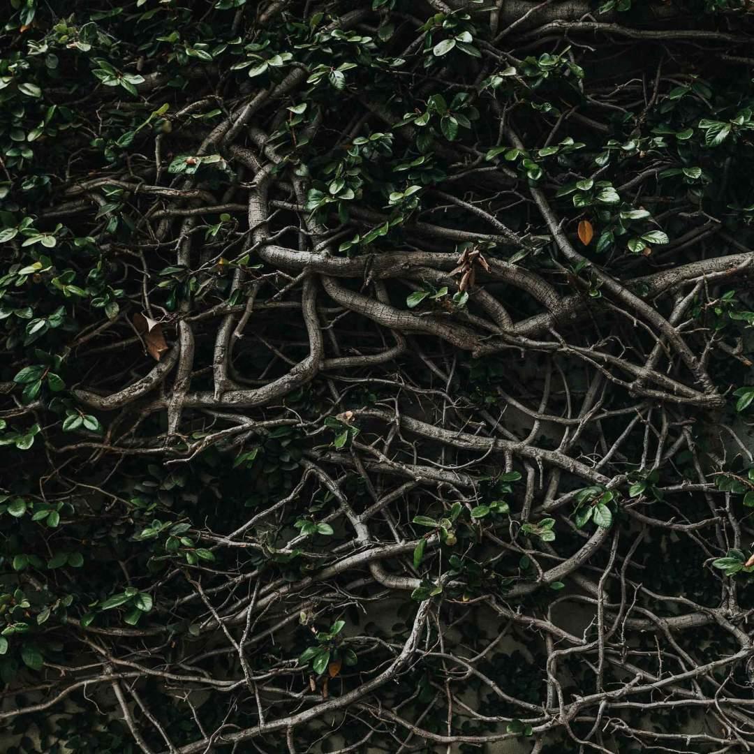 Notre avis sur La Terre de Floratropia, illustré ici en branches