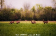 Iubind_natura (6) (Copy)