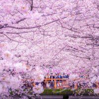 Orașul Musashino invită 4 brașoveni să viziteze Japonia cu ocazia Jocurilor Olimpice și Paralimpice - Tokyo 2020