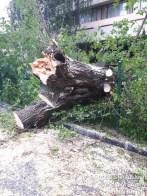 curatenie arbori (3)