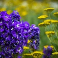 """Un sonet pe zi cu Adrian Munteanu:""""Printre grădini arzând"""""""