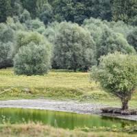 Plantăm copaci de centenar!