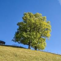 """Sonetoterapie: """"Acelaşi pom"""", de Adrian Munteanu – text și interpretarea autorului"""