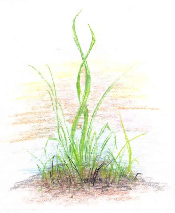fire de iarba 1