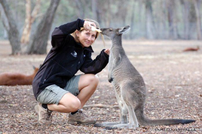 heure du biberon des kangourous