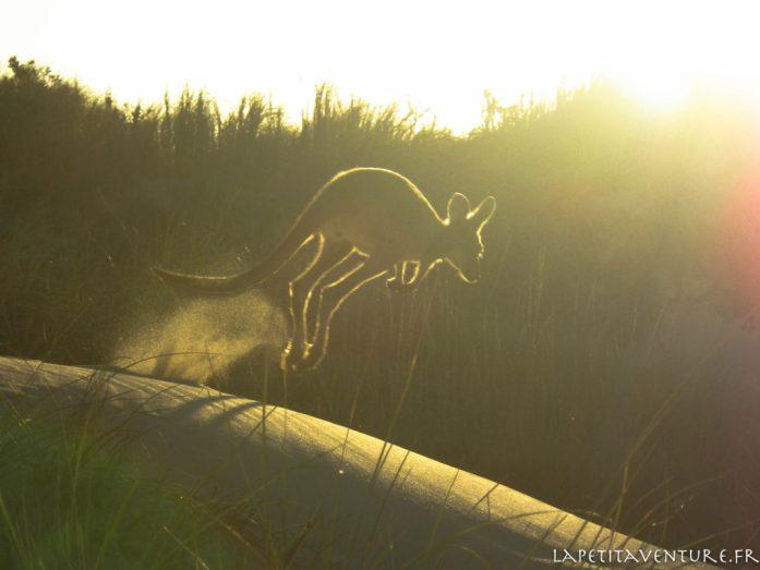saut de kangourou