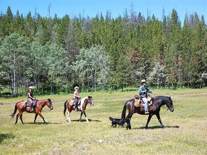 chevaux près du lac Chilko