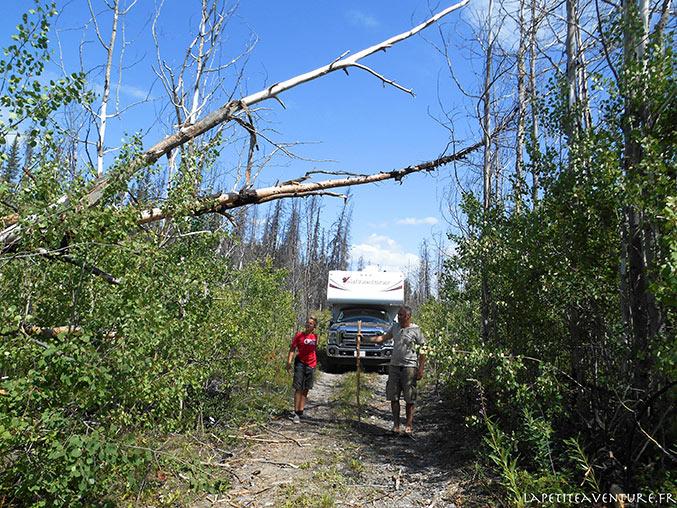 Arbres sur la piste du lac Chilko