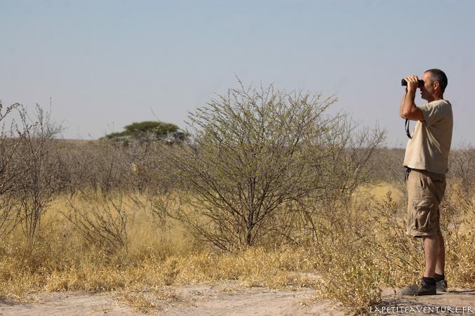 observation dans le Kalahari