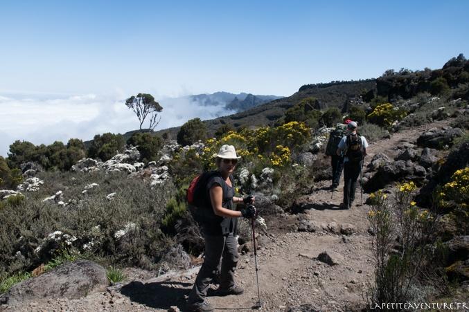 Fleurs du Kilimandjaro