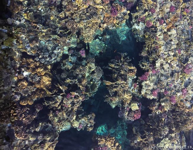 coraux de la mer rouge