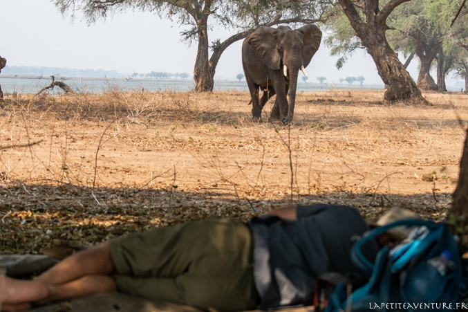 Sieste au bord du zambèze