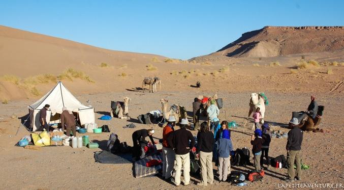 chameau du désert du Maroc