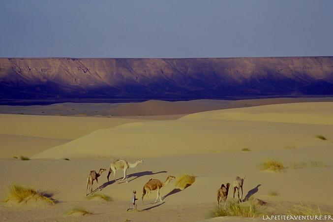 Chameliers dans les dunes