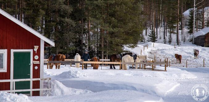 Centre équestre en Laponie suédoise