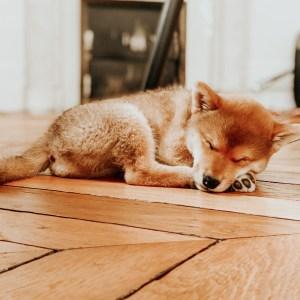Yoshi nous a rejoint il y a déjà une semaine ! Je vous raconte tout sur son adoption et ses premiers jours chez nous.