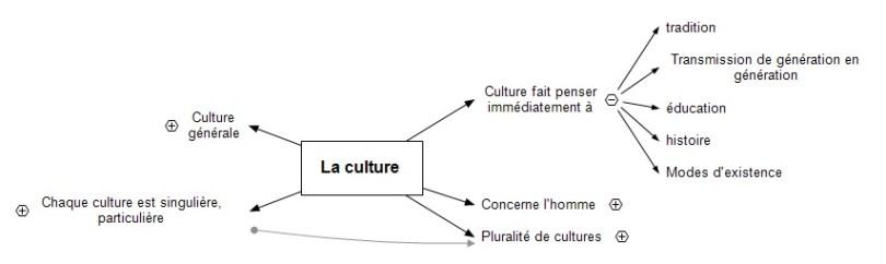 La culture ts1