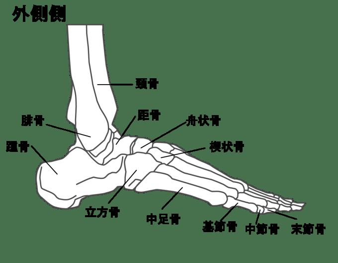 足の骨外側側