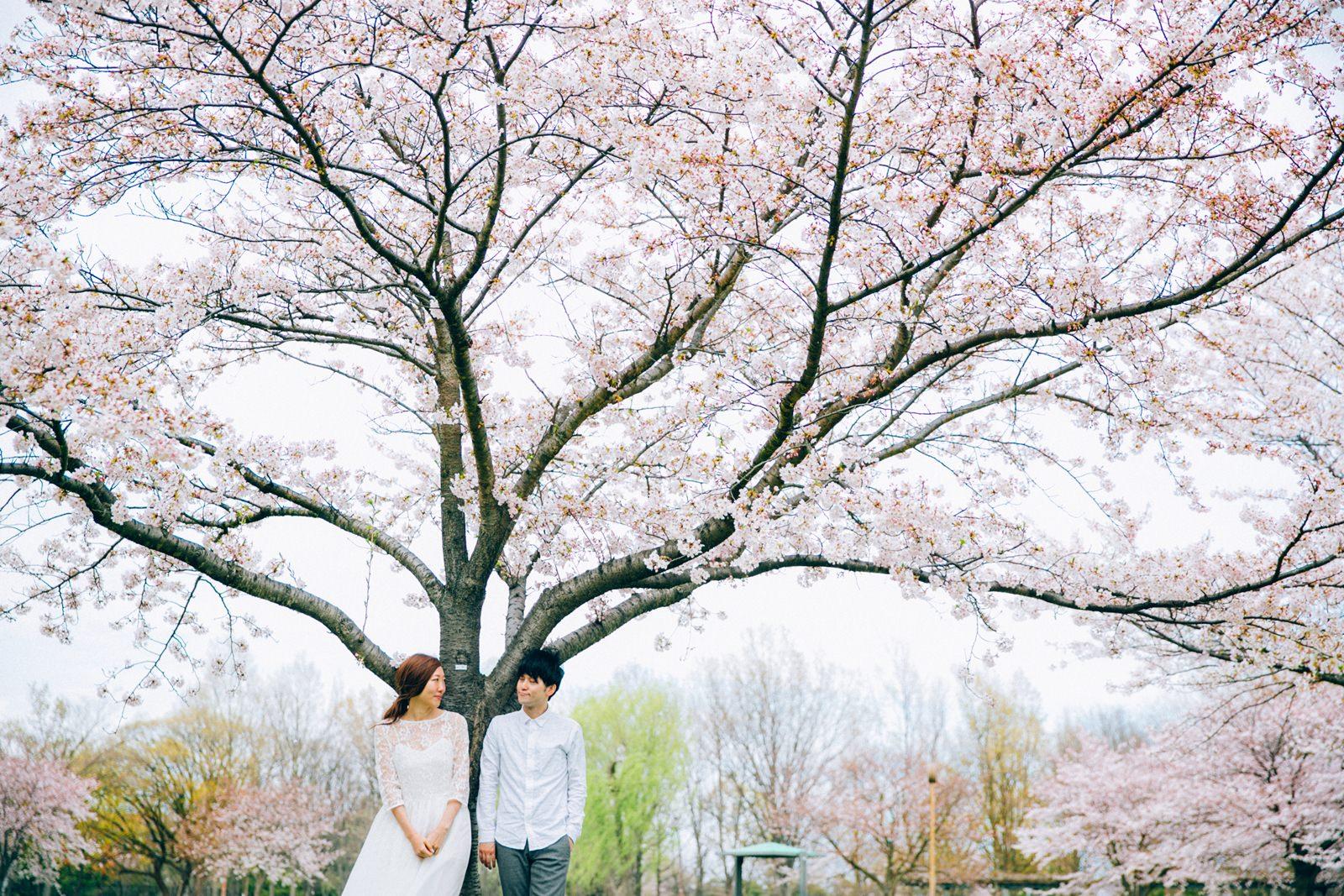 (繁體中文) 清新櫻花婚紗拍攝  就在東京