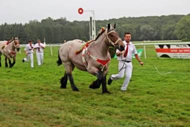 concours-ardennai-Vittel (9)