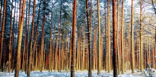 Forêt, Sud de l'Estonie (Mikitamäe). Crédits : VaR.
