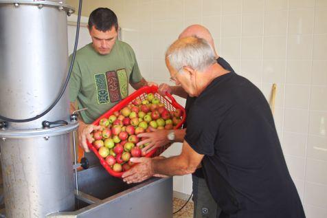 Les pommes sont versées dans le broyeur.