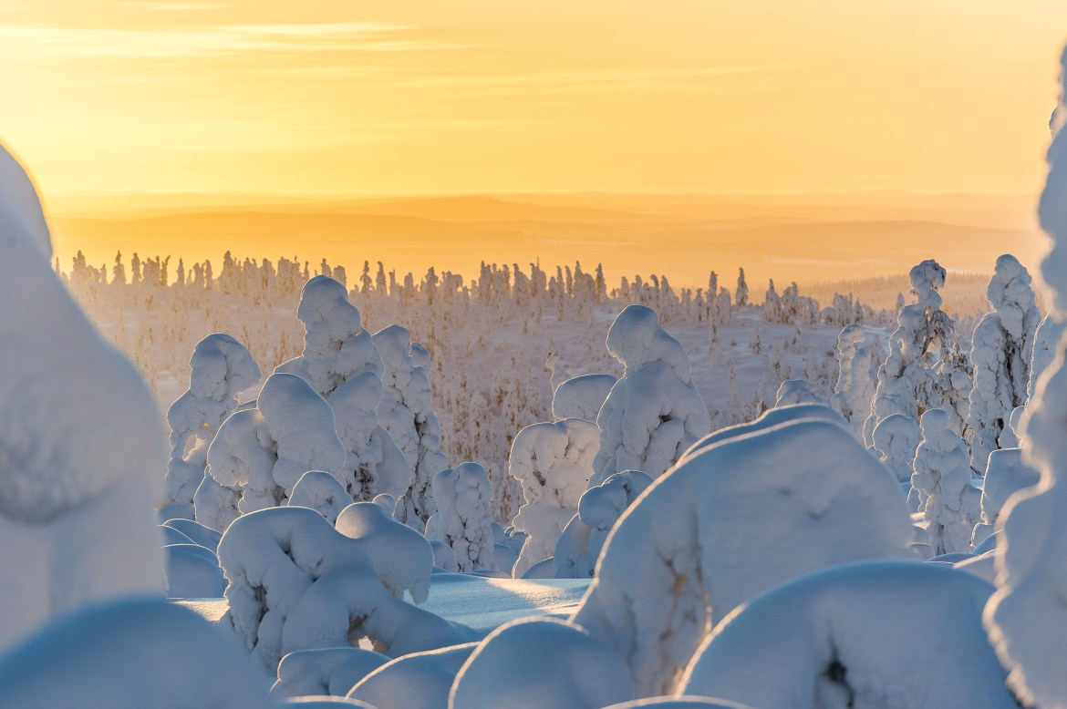 Frosted-trees-Lapland-Sunset