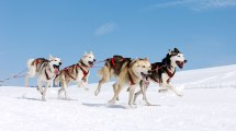 Lapland Travel Dog Sled Tours In