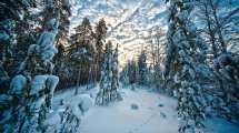 Day Trips Levi Finland Lapland Activities & Tours