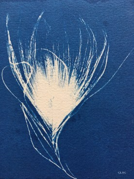 Plume de paon 2, cyanotype, 11x12,5cm ©GLSG