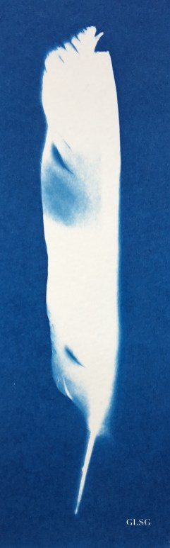 Plume 2, cyanotype, 18,5x7cm, coll.particulière ©GLSG