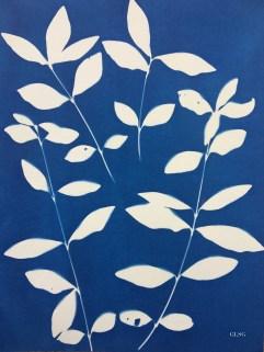 Pervenche, feuilles (Vinca major, Apocynaceae) cyanotype, 24x32cm ©GLSG
