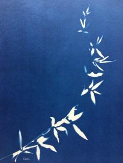 Rosier de Lady Banks (Rosa banksiae, Rosaceae) cyanotype, 24x32cm ©GLSG