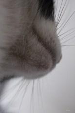 """""""Si vous êtes digne de son affection, un chat deviendra votre ami mais jamais votre esclave."""" (Théophile Gautier)"""