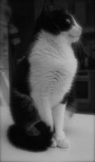 """""""Si l'on pouvait croiser l'homme et le chat, ça améliorerait l'homme, mais ça dégraderait le chat."""" (Mark Twain)"""