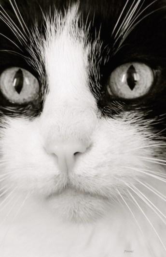 """""""La mélancolie C'est un chat perdu Qu'on croit retrouvé."""" (Léo Ferré)"""