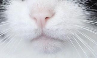 """""""On ne possède pas un chat, c'est lui qui vous possède."""" (Françoise Giroud)"""