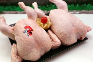 Productos básicos, pollo limpio, gallinas, pollo de granja, de coral