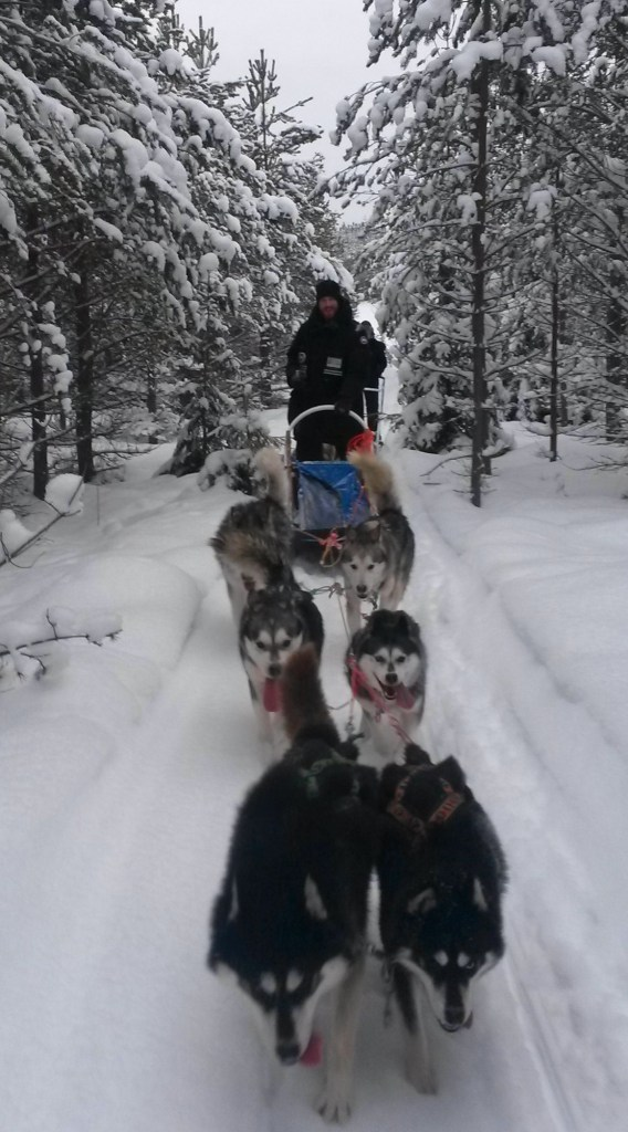 Raid chien de traineau