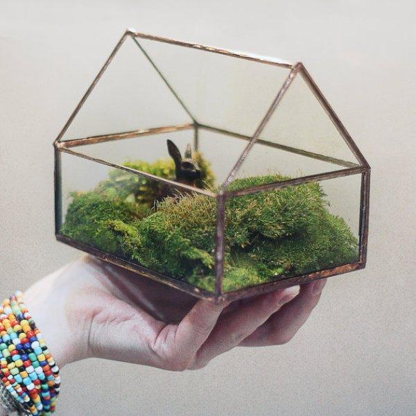 maison terrarium