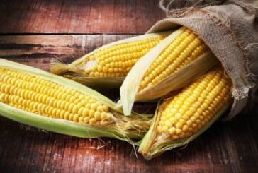 Le maïs pourrait bien sauver le Mexique de Donald Trump !