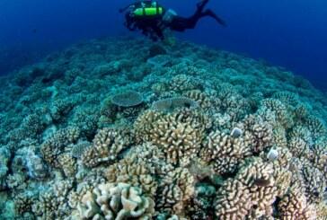 Reportage – Les coraux des Caraïbes en danger de mort ! (Videos)