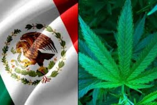 Le Mexique à un pas de la légalisation de la marijuana !